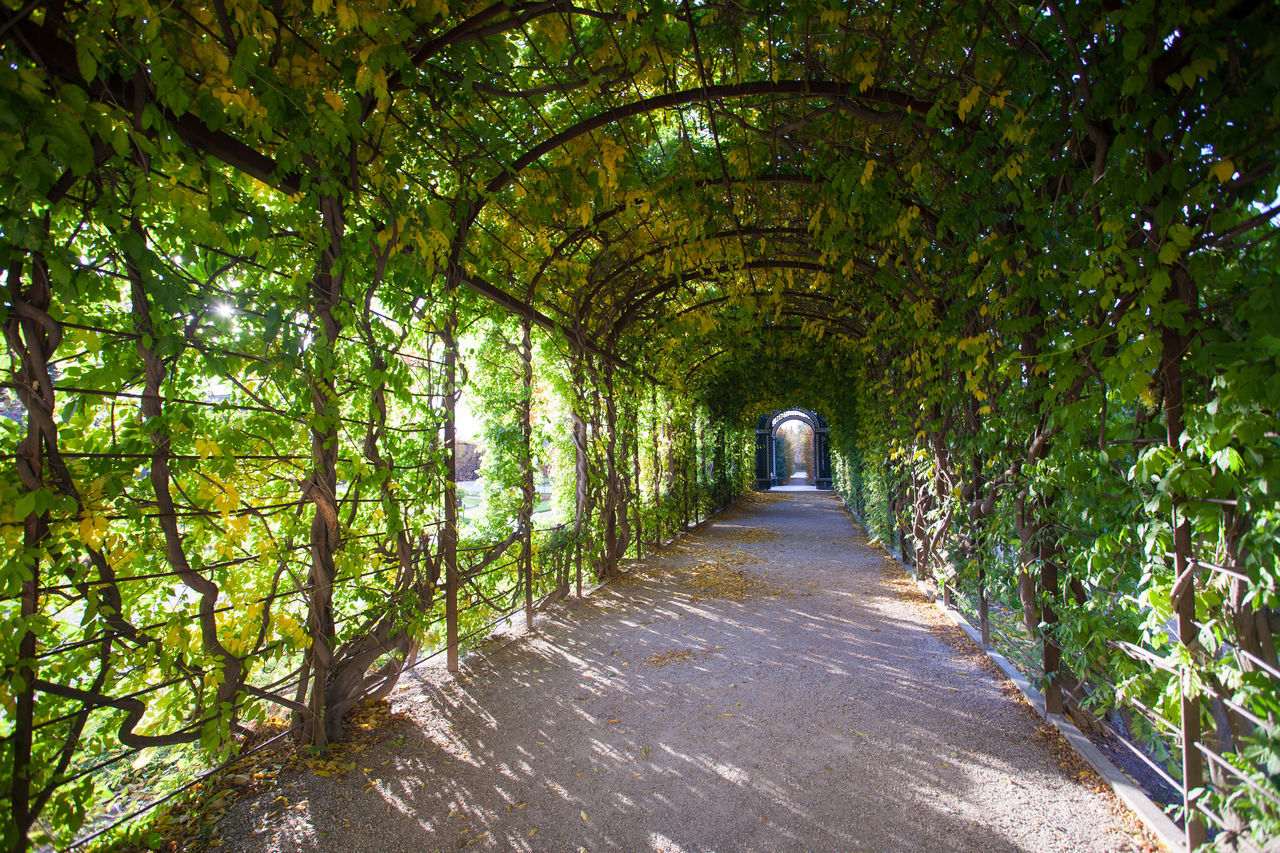 Floral pergola with leaves on the walls and ceiling Admission Alley Arbour Beauty In Nature Day Door Entrance Floral Footpath Gate Green Color Leaves Nature No People Outdoors Path Pavilion Pergola Road Summerhouse The Way Forward Tree Way