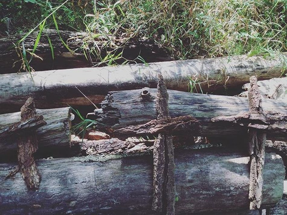 Found these in the woods. Creepy Crosses 3crosses Yikes Whooaaa Spooky Bark Trees Woods