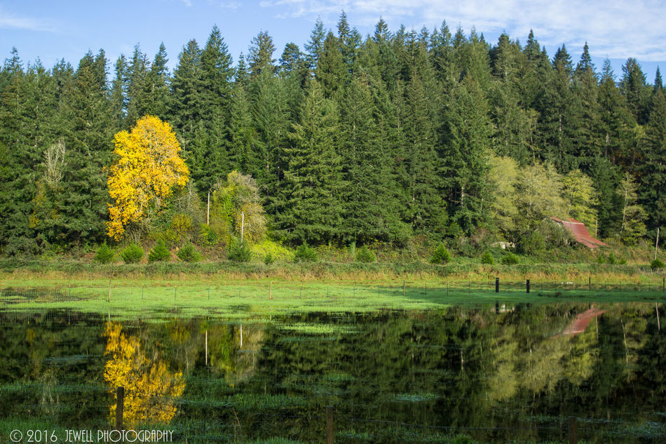 Nature Tree Reflection Growth Water Tranquility Beauty In Nature Tranquil Scene Day Sky Lush - Description Dramatic Sky Nature Jewell Photography Coos Bay DSLR Photography Outdoor Photography Oregon Landscape Canonphotography Beauty In Nature Oregon Coast Cloud - Sky Grass Reflection