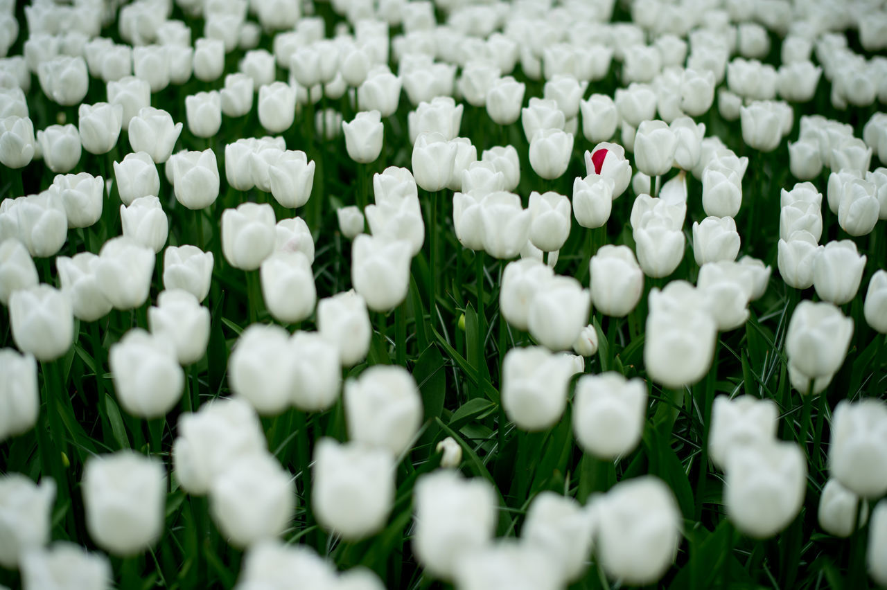 Backgrounds Beauty In Nature Blooming Close-up Day Different Flower Flower Head Fragility Freshness Full Frame Green Color Growth Indoors  Nature No People Petal Pink Plant Selective Focus Standing Out From The Crowd Standing Tall Uniqueness White White Color