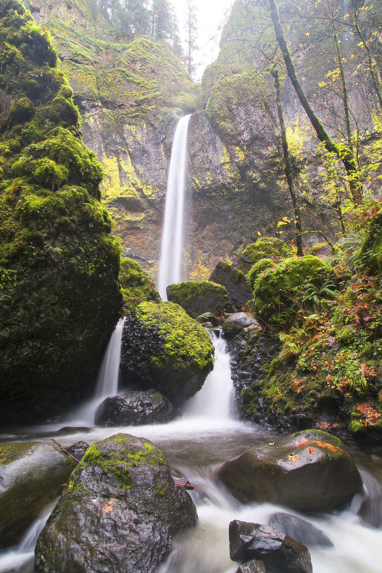 Beauty In Nature Day Elowah Falls Fall Fall Beauty Forest Long Exposure Mount Hood Multnomah Falls  Nature No People Oregon Oregon Explored Outdoors Tree Water Waterfall First Eyeem Photo