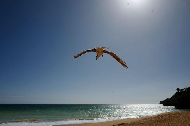 Blue Sky Flying Bird Beach