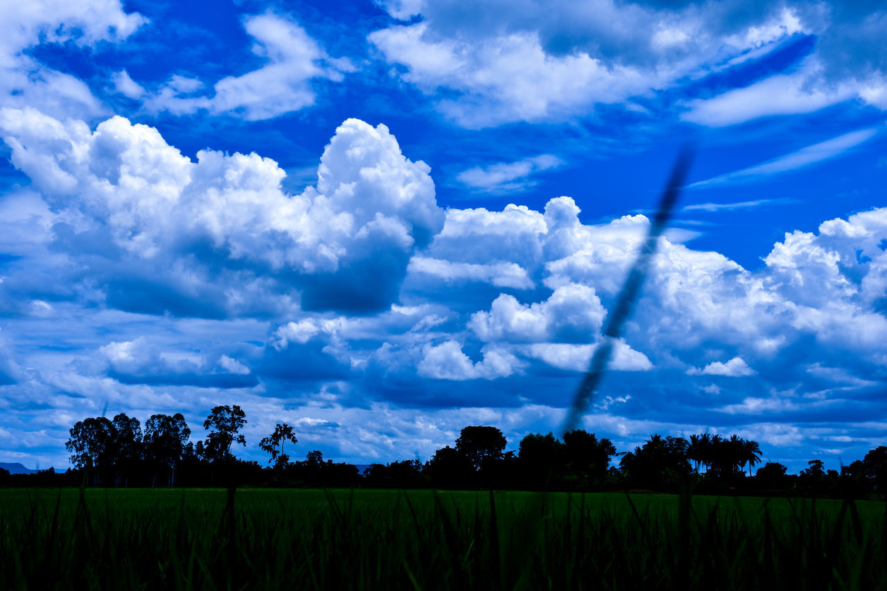 beauty in nature, nature, tranquility, sky, scenics, tranquil scene, cloud - sky, field, growth, no people, landscape, idyllic, outdoors, agriculture, day, blue, rural scene, tree