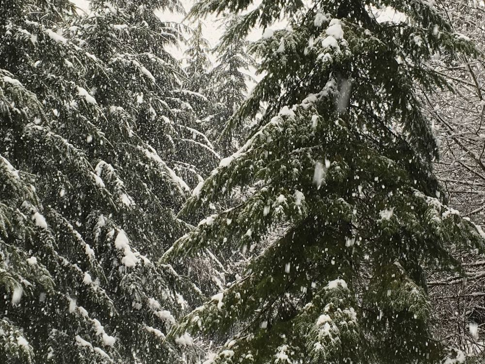 Snowcoveredtrees winter Outdoors Snow Beauty In Nature Mountain Cold Temperature Washington State PNW