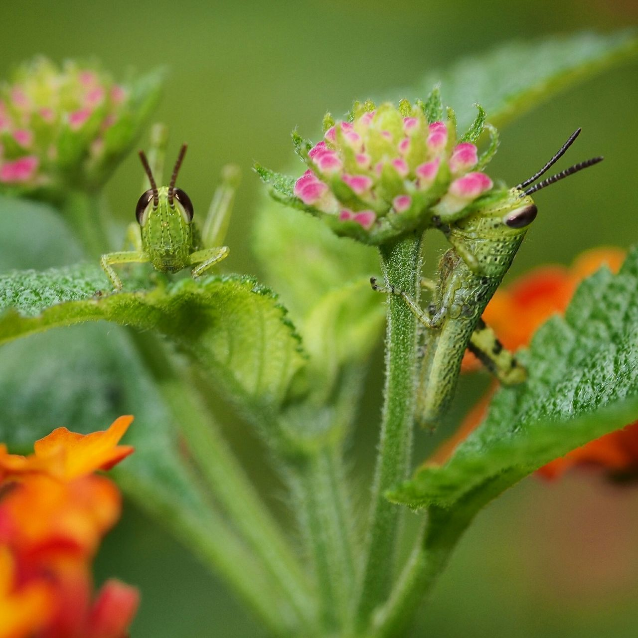Close-Up Of Insects On Plant