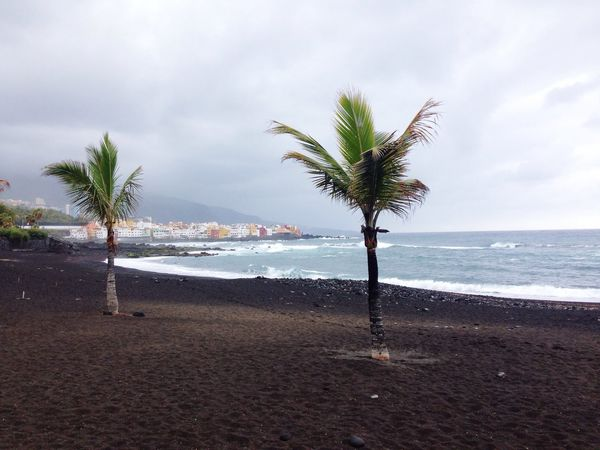 Tenerife Teneriffa Tenerife Island Beach Black Sand Sea Ocean Fishing Village Clouds And Sky Atlantic Colorful Palm Trees Grey Sky