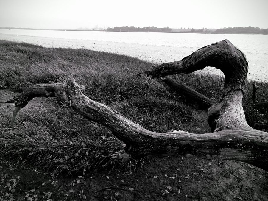 Outdoors Beach No People Textures And Surfaces Blackandwhite Photography Landscape Photography Deben River, Suffolk Riverbank View Driftwood
