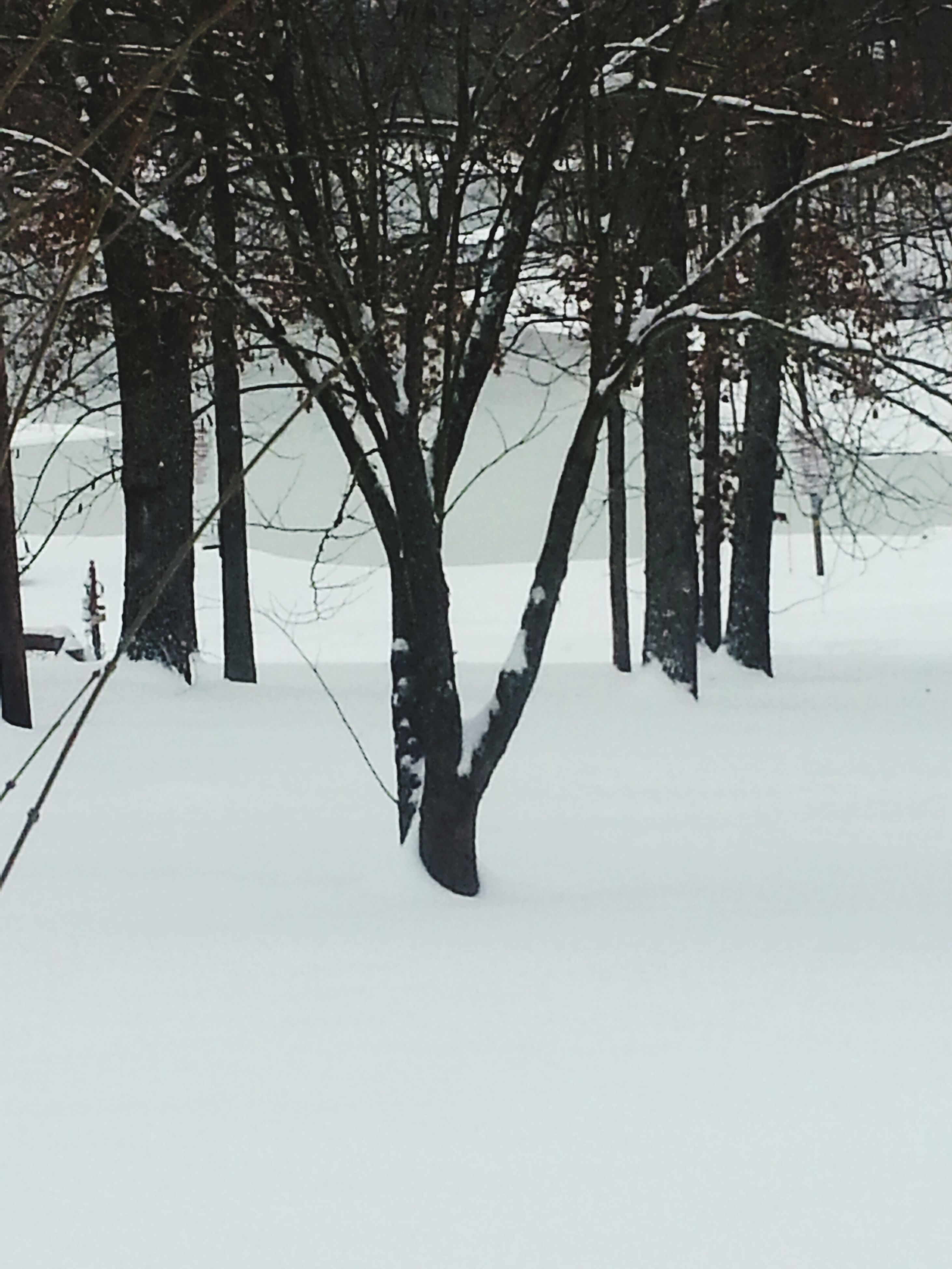 snow, winter, cold temperature, tree, season, bare tree, weather, tranquility, covering, tranquil scene, nature, branch, beauty in nature, landscape, tree trunk, covered, scenics, frozen, snow covered, white color