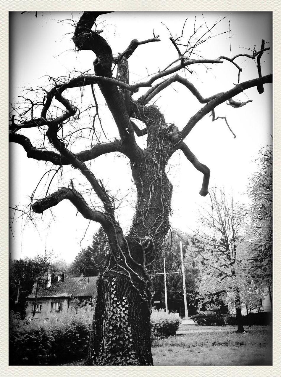 Sad but true Hugging A Tree From My Point Of View Blackandwhite Nature EyeEm Best Shots - Black + White Popular Photos EyeEm Bnw EyeEm Nature Lover Streetphoto_bw EyeEm Best Shots