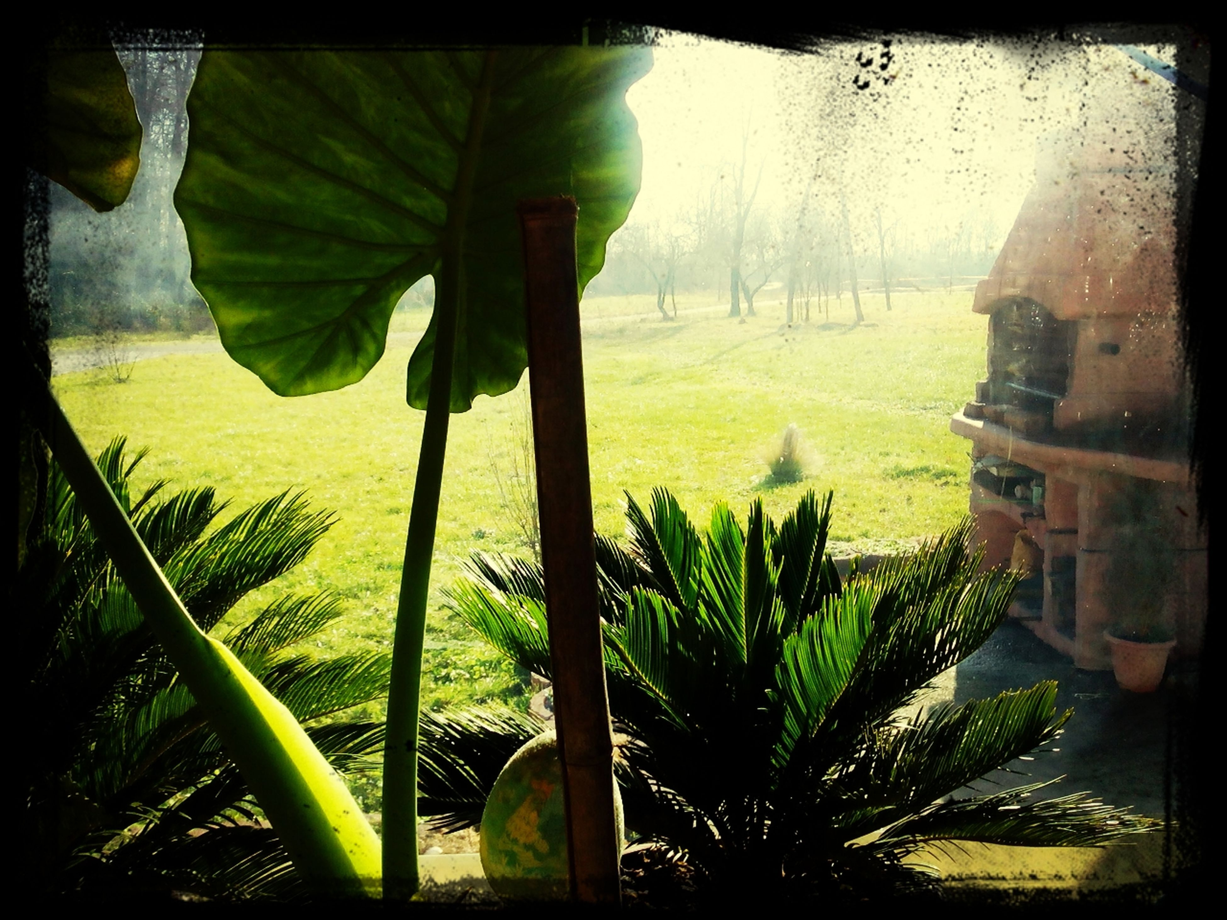 transfer print, auto post production filter, tree, plant, growth, sunlight, panoramic, green color, built structure, water, day, grass, nature, building exterior, window, architecture, indoors, palm tree, shadow