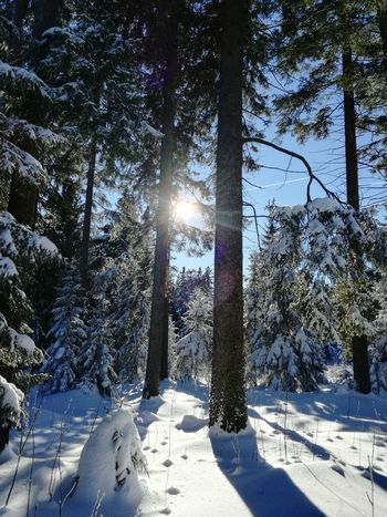 Tree Snow Winter Cold Temperature Beauty In Nature Nature No People Outdoors Sky Day Nofilter