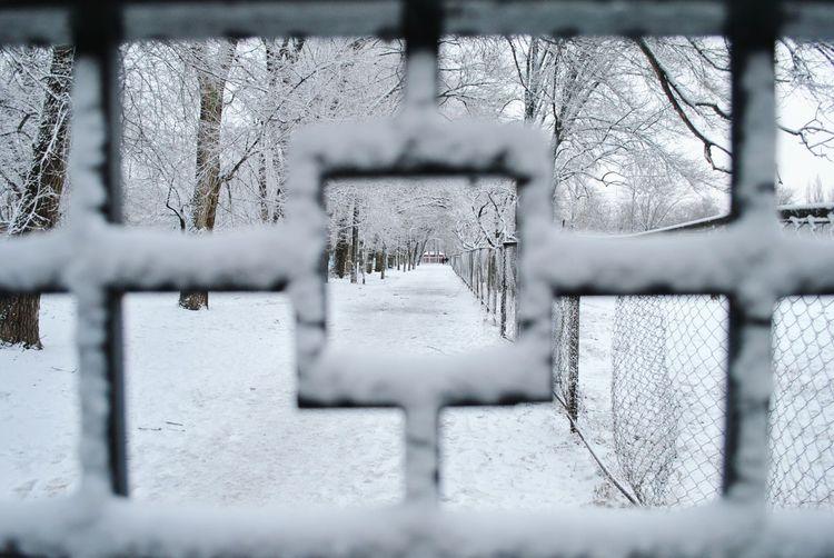зима снег перспектива