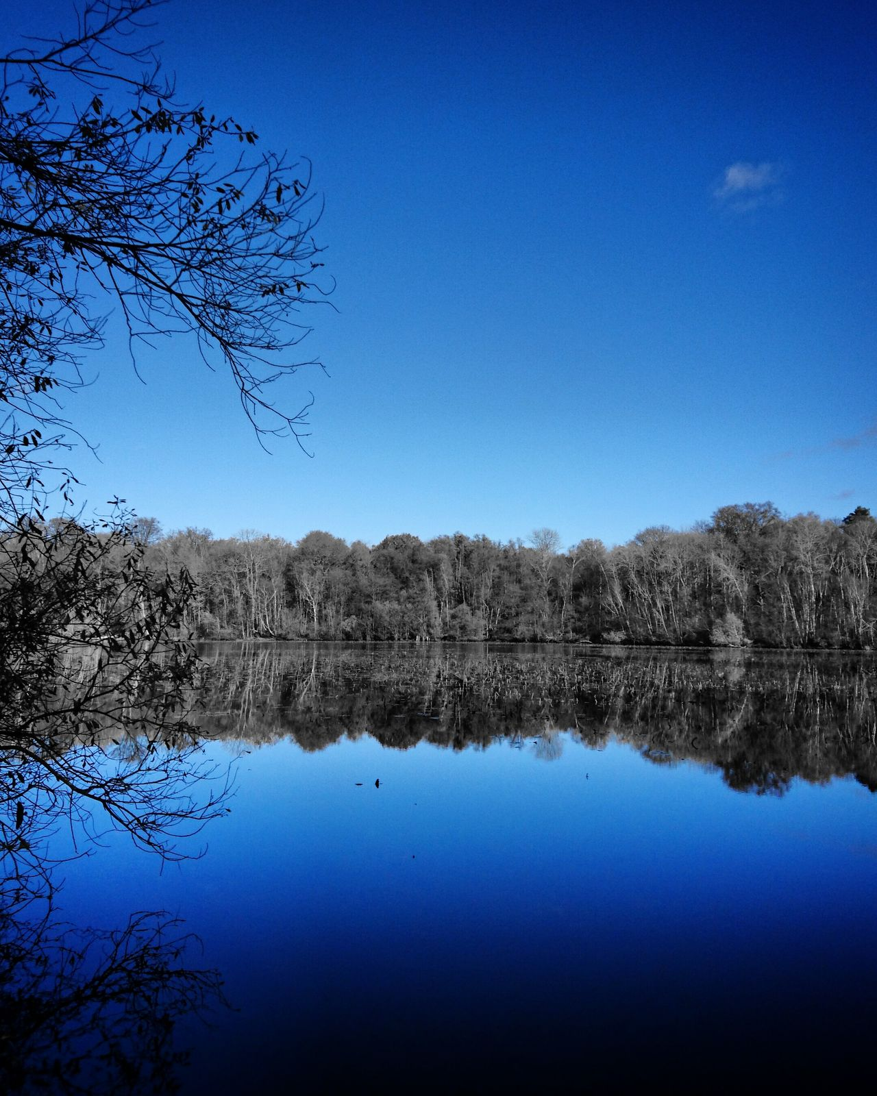 Noir et bleu. Splash Of Color Reflection Water Nature Tree Tranquility Idyllic Sky Lake Beauty In Nature Scenics Clear Sky Tranquil Scene No People Outdoors Reflection Lake Day Serenity Beauty In Nature Splashcolor