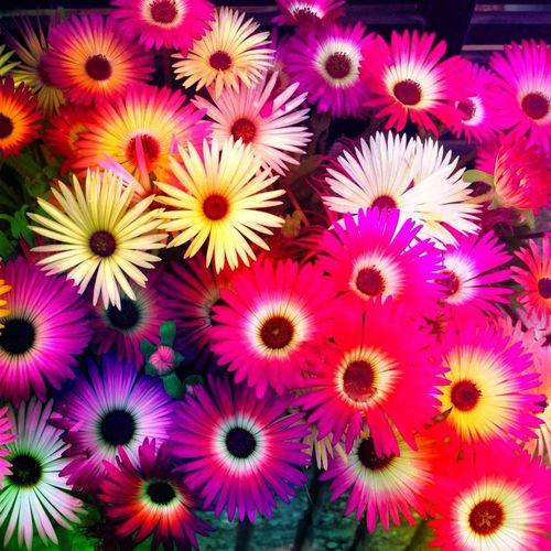 花 frowers Nature Bautiful