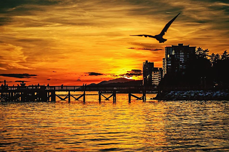 Birds in sky at sunset Birds Sunset Sky Flying Silouette Orange Seawall Vancouver BC Sea Side Ocean View