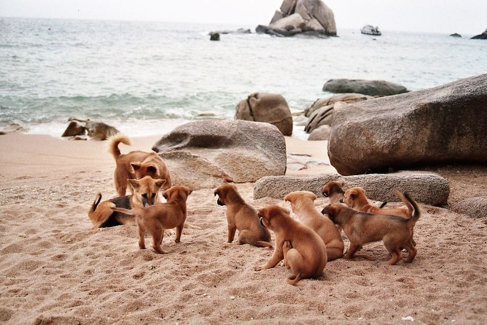 Beautiful stock photos of welpen,  Animal Family,  Animal Themes,  Animals In The Wild,  Beach