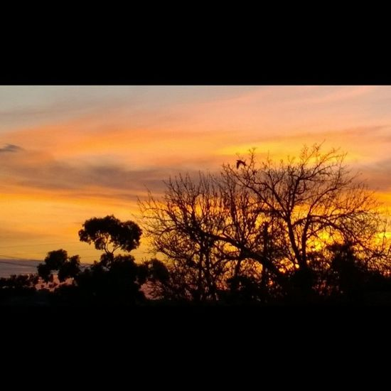 Sunset ? Silhouette Lumia1020 Nokialumia1020 winphan wpphoto
