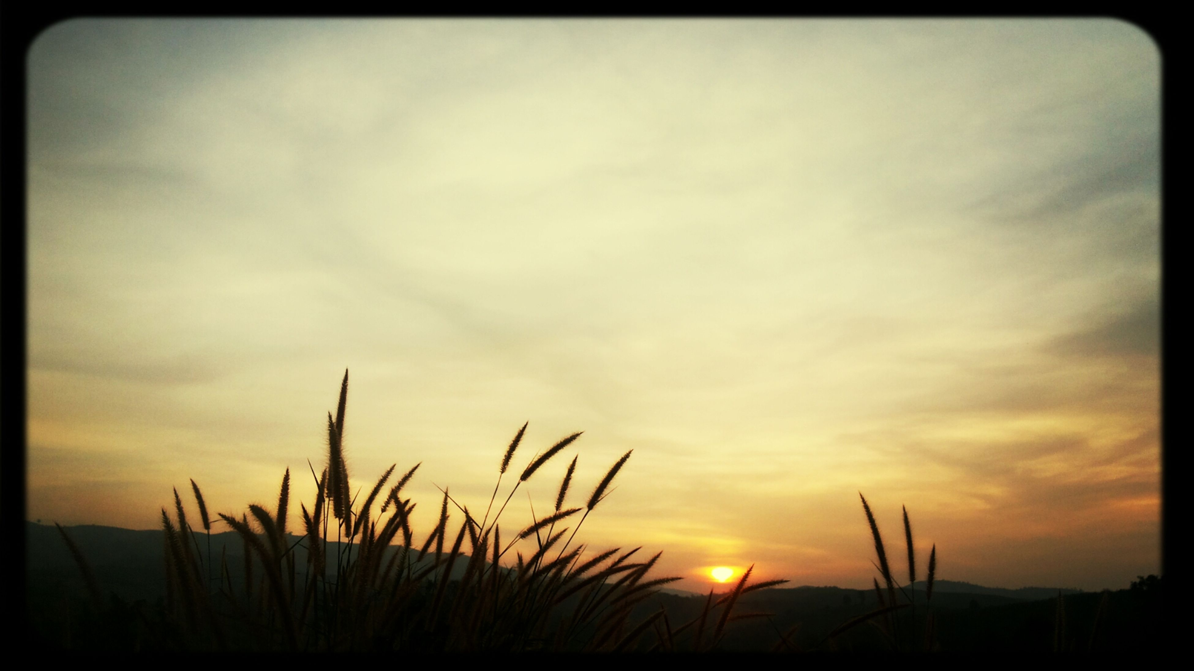 sunset, sky, silhouette, sun, beauty in nature, tranquil scene, tranquility, scenics, orange color, nature, plant, cloud - sky, idyllic, growth, cloud, outdoors, dramatic sky, auto post production filter, sunlight, no people