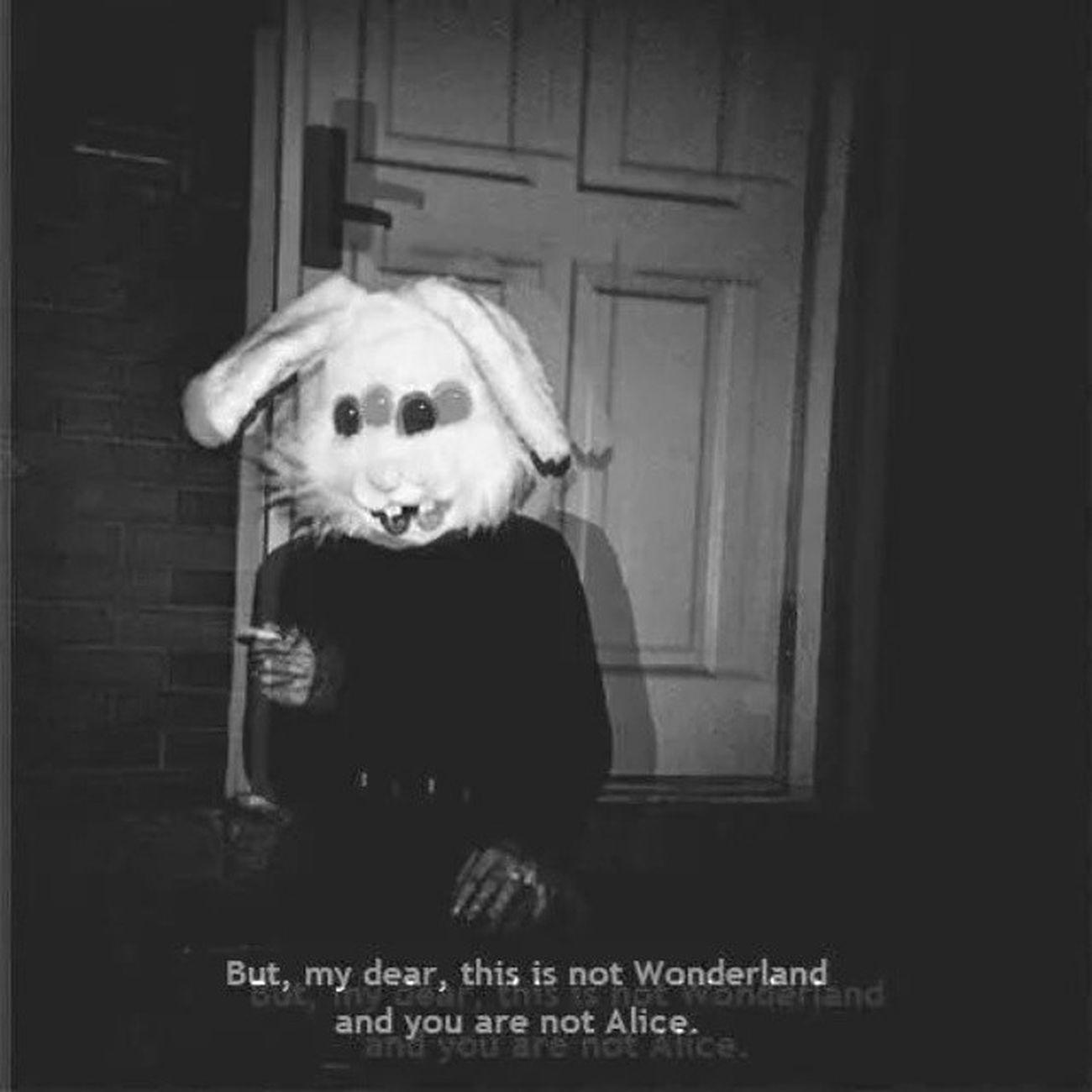 Bestpicture Alice Wonderland Whiterabbit :D / it reminded me the song OnenightinNYC ;) 3:)