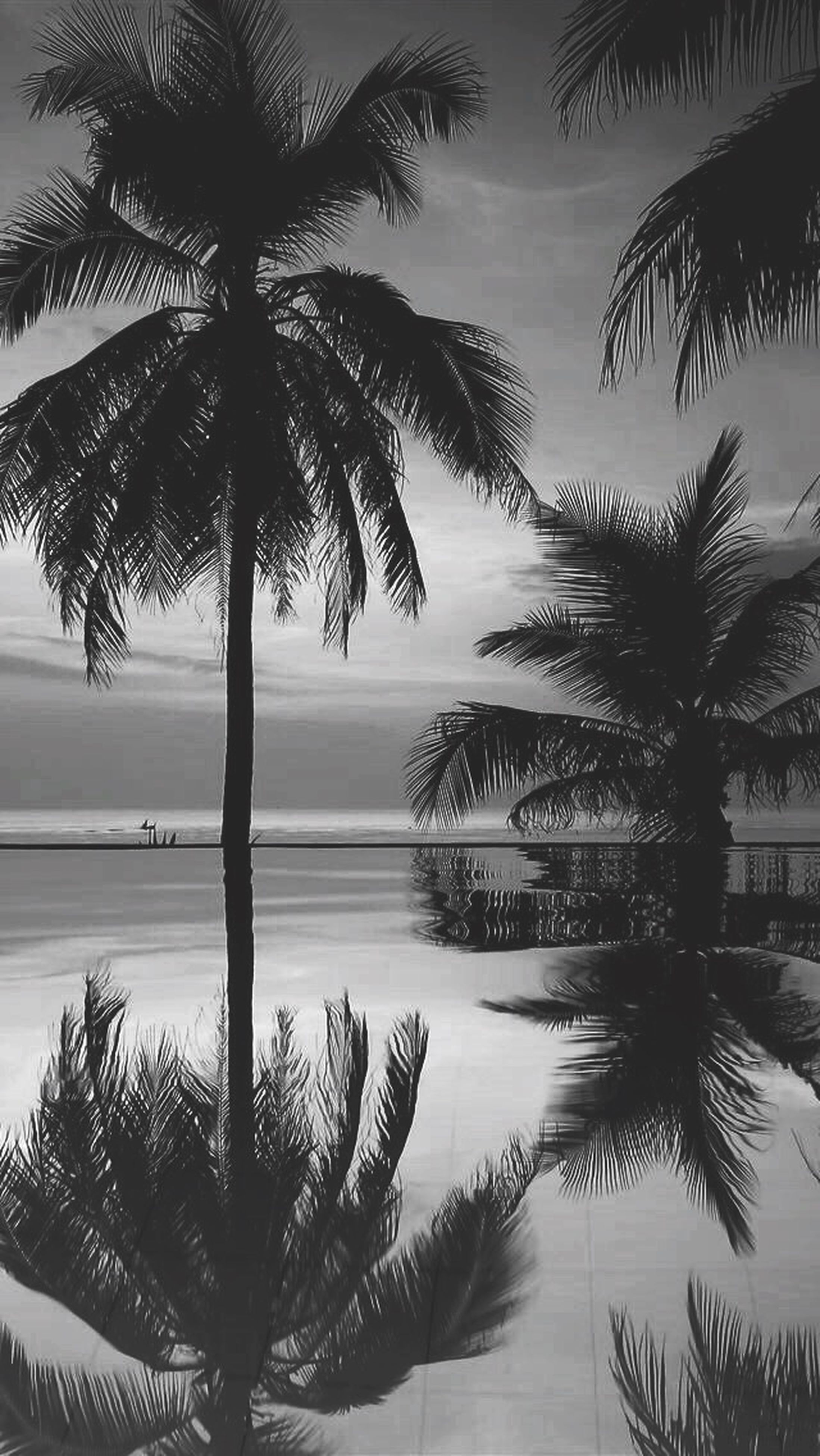 palm tree, tree, sea, tranquility, water, tranquil scene, sky, beauty in nature, scenics, horizon over water, beach, nature, growth, sunset, silhouette, tree trunk, palm leaf, coconut palm tree, shore, idyllic