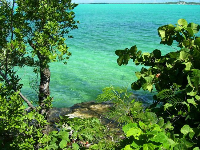 Beauty In Nature Blue Branch Day Emerald Water Green Color Growth Horizon Over Water Leaf Nature No People Outdoors Plant Scenics Sea Shoreline Shorelines Sky Tranquil Scene Tranquility Tree Water