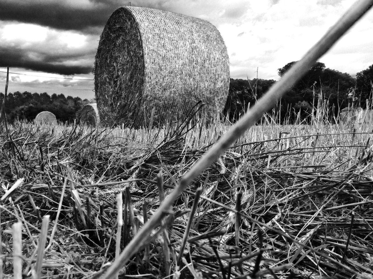 Bw_friday_challenge Black And White Landscape Streamzoofamily