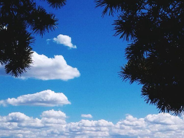 Streetphoto Ulan-Ude Trees Sky Nature Holidays