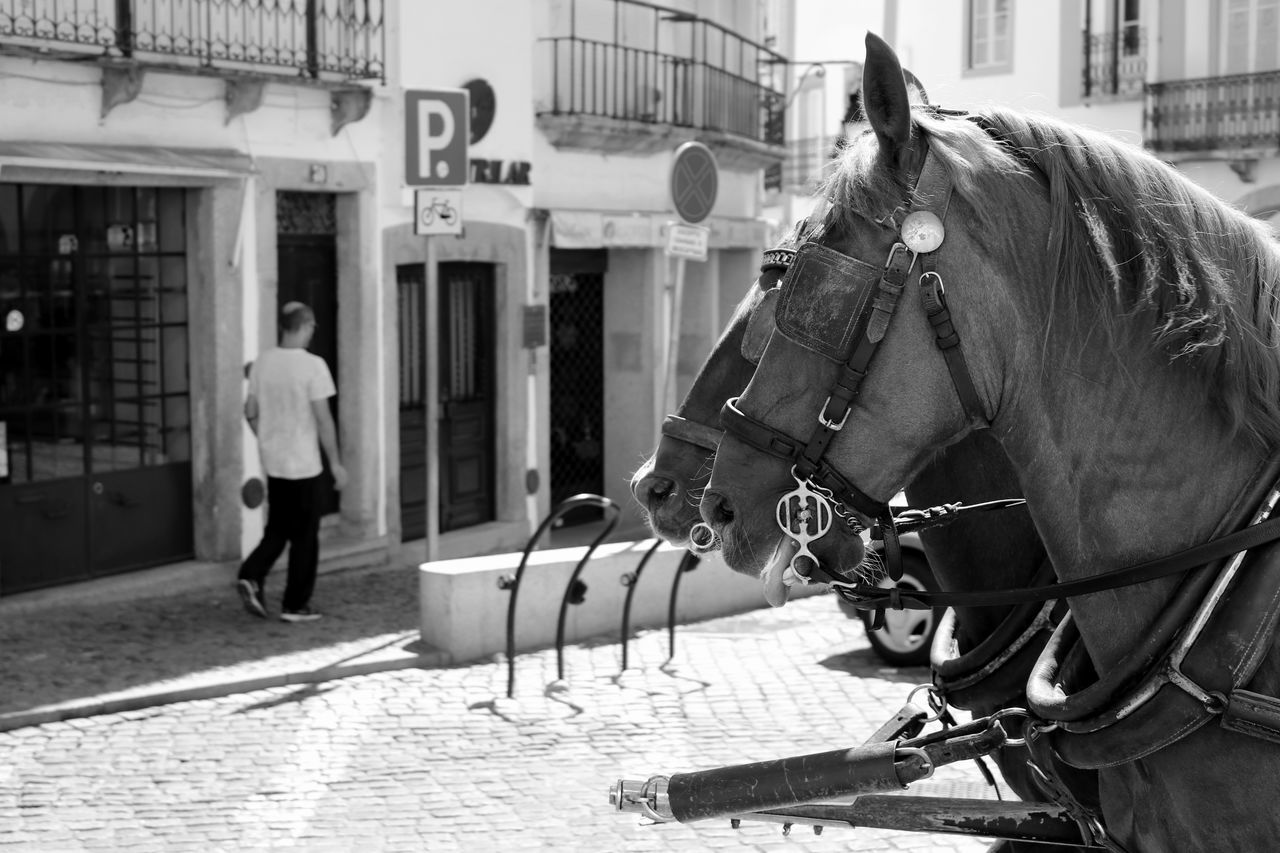 Black & White Black And White Blackandwhite Blackandwhite Photography Bnw Eye4photography  EyeEm EyeEm Best Shots EyeEm Bnw EyeEmBestPics EyeEm Gallery Taking Photos at Évora  Portugal