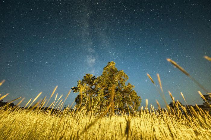 Worm's Eye View of the Cosmos Astrophotography Milkyway Stars TehachapiCalifornia California Oak Tree Nightphotography