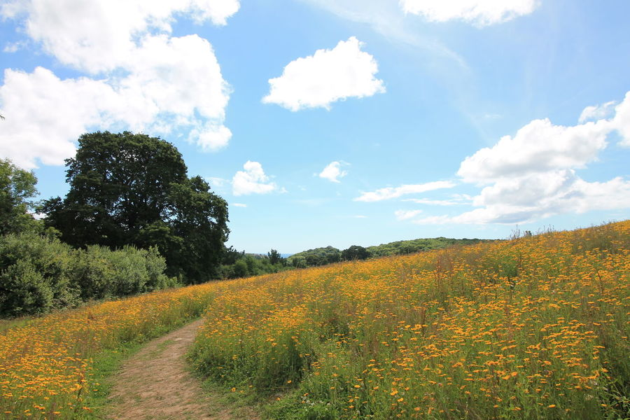 Beauty In Nature Blue Cloud Cloud - Sky Corn Day Field Flower Horizon Over Land Landscape Lost Gardens Of Heligan Nature No People Sky Tranquil Scene Tree Yellow
