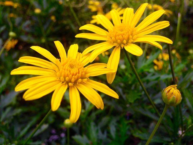 Lemon By Motorola EyeEm Nature Lover Flowers Spring Has Arrived IPhoneography Nepal