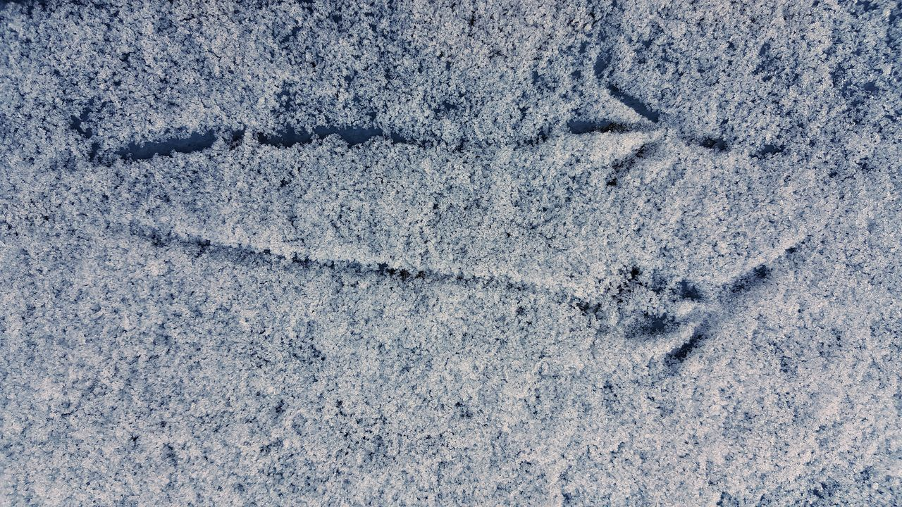 Take Off! AntiM Backgrounds Birds Close-up Crow Day Departure Full Frame Knitted  Nature No People Pattern Snow Snow ❄ Take Off Textured  Traces Winter Winter