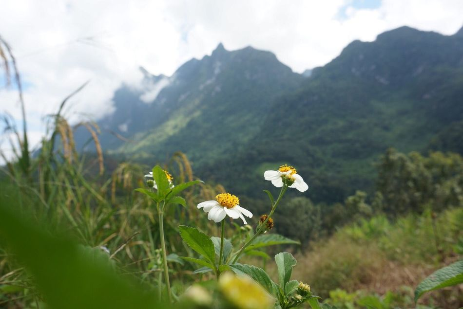 There are flowers. Flower Beauty In Nature Nature Freshness Blooming Plant Outdoors Enjoying Nature Enjoying Life Relaxing Flowers In Nature  Chiang Dao Chiang Mai | Thailand