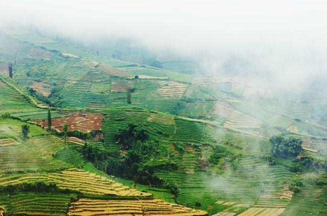 Step Farming INDONESIA Enjoying Life