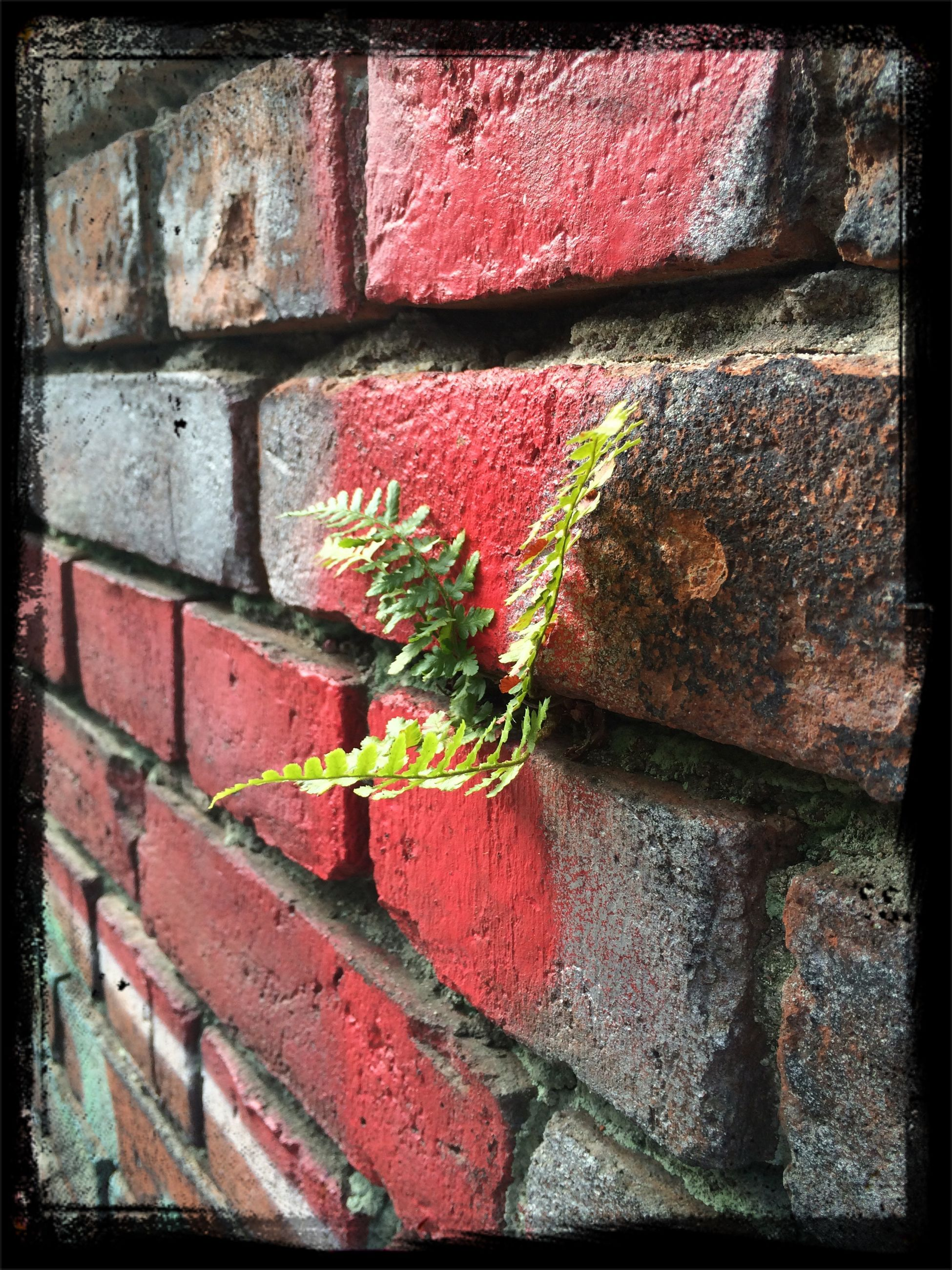 brick wall, wall - building feature, built structure, red, architecture, full frame, growth, stone wall, building exterior, plant, close-up, backgrounds, textured, auto post production filter, transfer print, brick, day, outdoors, wall, no people