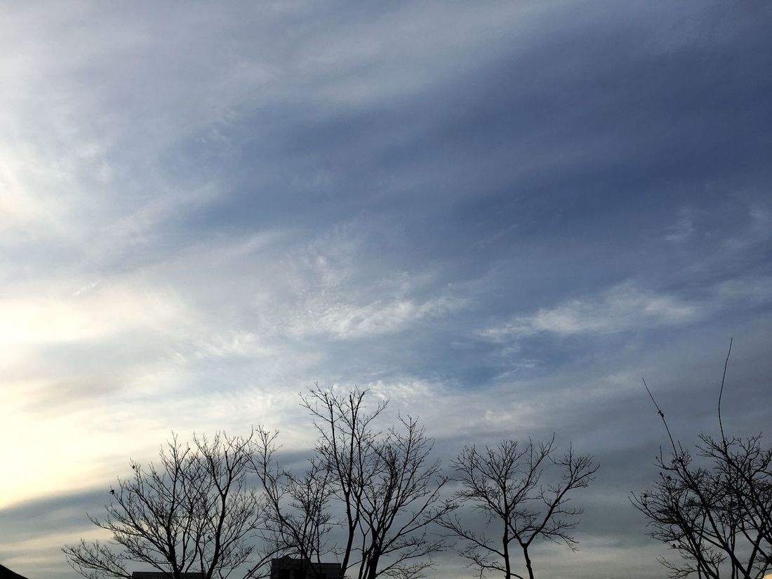 Tree Sky Low Angle View Nature Cloud - Sky No People Tranquility Growth Scenics Beauty In Nature Outdoors Day Treetop