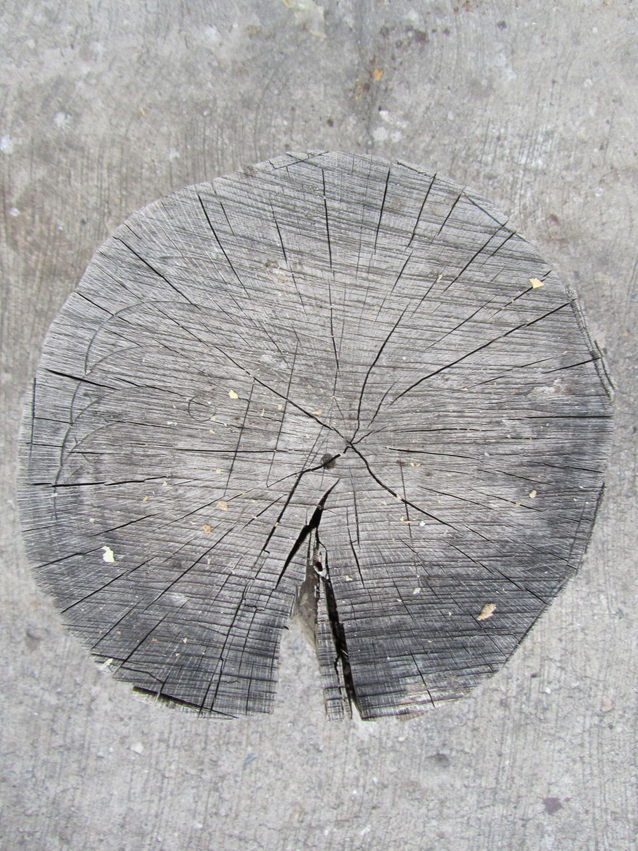 Close-up Detail No People Beauty In Nature Nature View From Above Directly Above Outdoors Point Of View Wood Wooden Texture Lines Cracks Cracked Wood Naturetextures EyeEmNewHere Flying High WeekOnEyeEm Grey