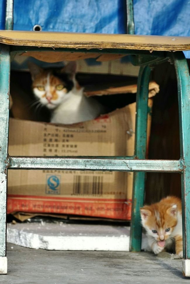被阿喵媽虎視了😨😱😼Animal Themes One Animal Pets Mammal Domestic Cat Domestic Animals Cat Vertebrate Animal Watching Front View Feline Sitting Zoology Mode Of Transport Animal Head  Peeking Curiosity Whisker Hiding Cat Photography Photography Street Photography First Eyeem Photo EyeEm Best Shots