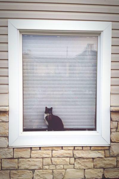 This Cat was sitting by The Window in This Morning Looking At Me ....well.... Smile then