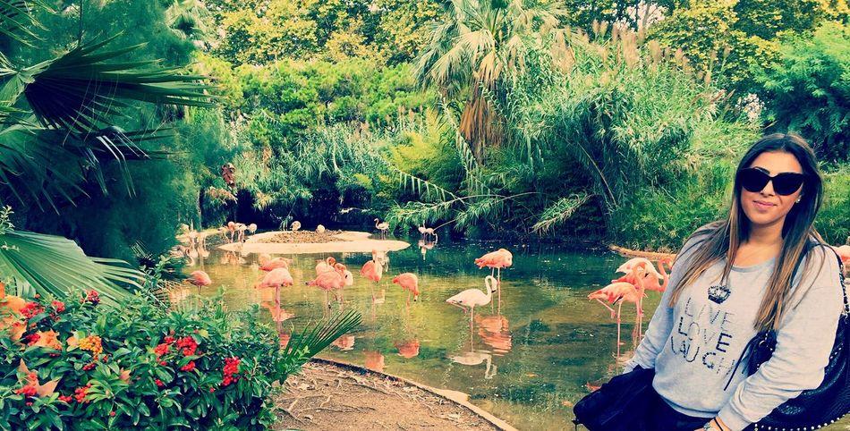 Hello World Flamingo Landscape Taking Photos Enjoying Life That's Me Nature Barcelona Taking Photos Exploring Traveling Zoo Live, Love, Laugh