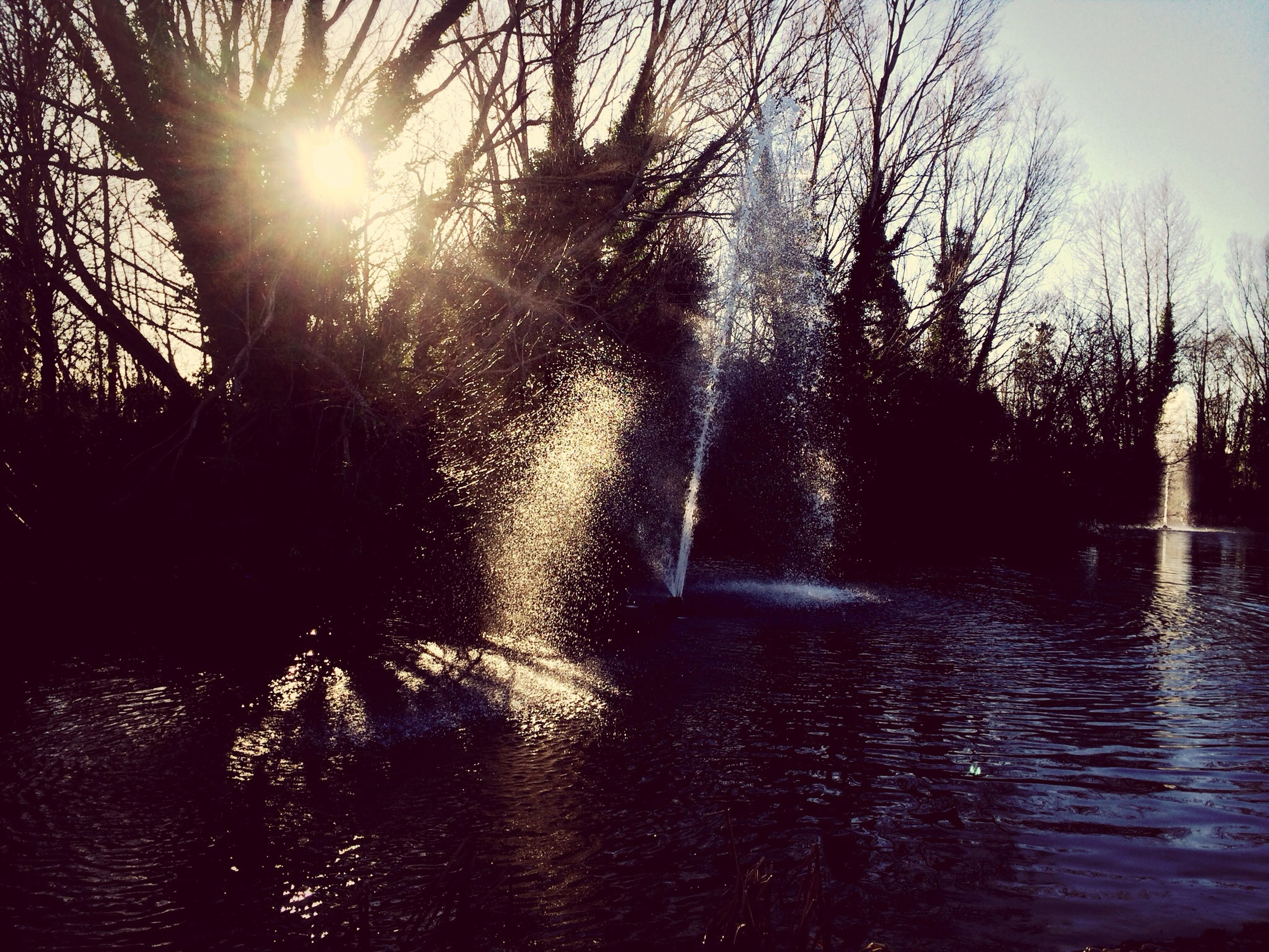 sun, water, sunbeam, tree, sunlight, lens flare, silhouette, rippled, waterfront, bare tree, sky, river, nature, reflection, tranquility, clear sky, sunny, lake, shiny, tranquil scene