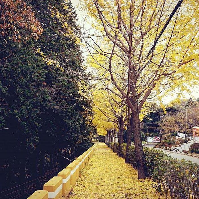 가을단풍 범어사 부산 Busan 바다 일상 데일리 사진 여행 일상공유 맞팔 Sotong 미러리스카메라 Follow Followme Photo Travel Daily Southkorea