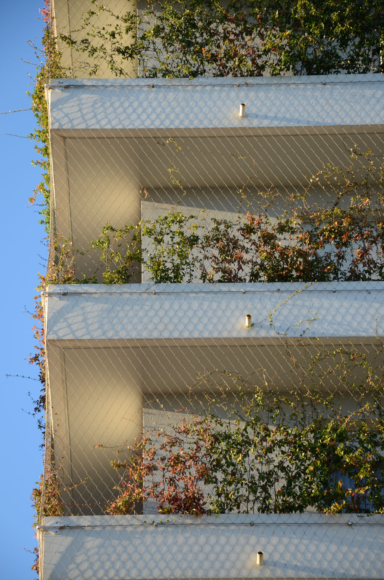 Architecture Balcony Close-up Day Green Wall Light And Shadow Nature No People Outdoors Sky Sunlight Sunny Sustainable Urban Geometry Grilling