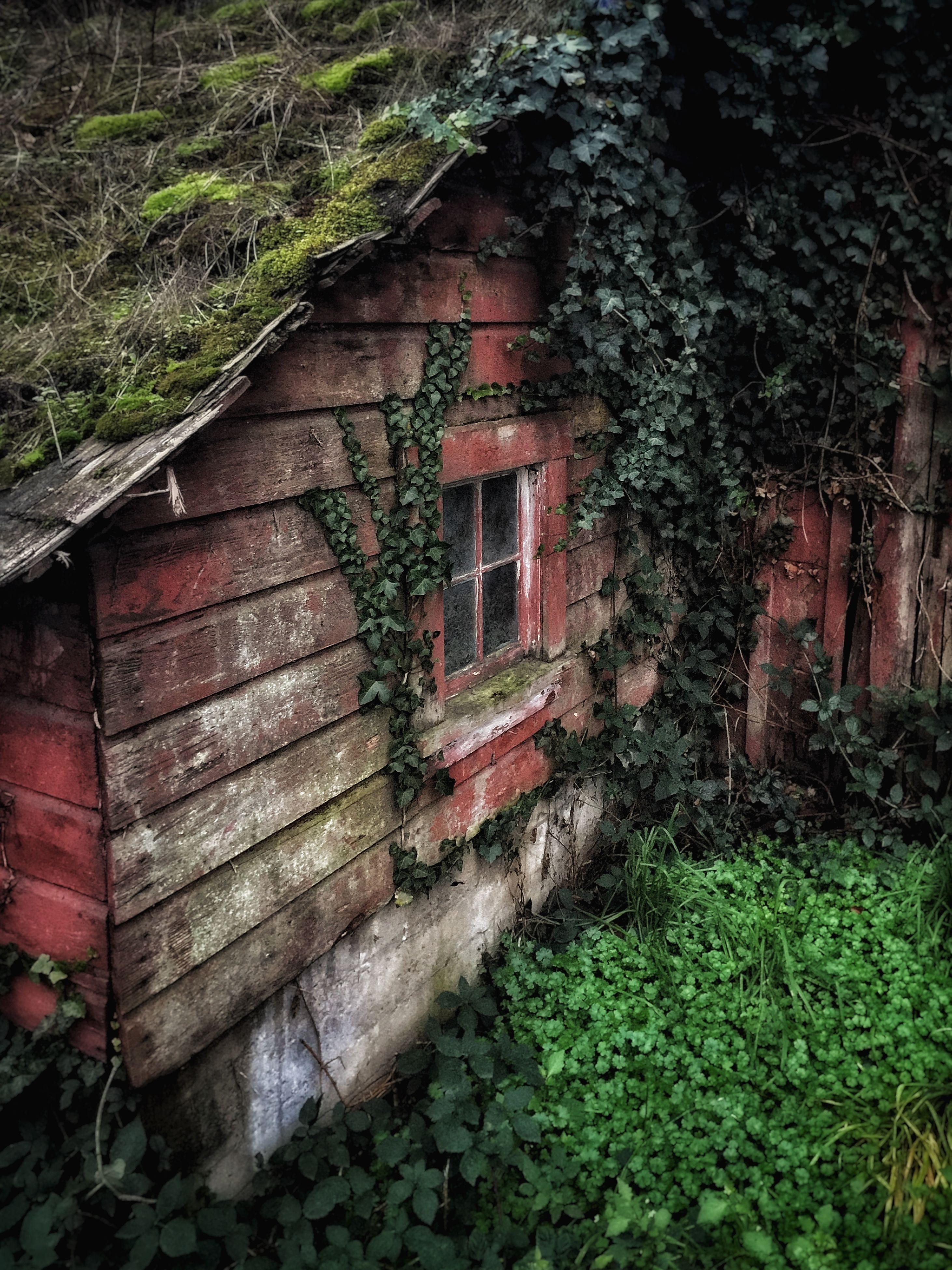 built structure, architecture, building exterior, abandoned, house, old, plant, obsolete, damaged, run-down, deterioration, weathered, residential structure, bad condition, growth, wall - building feature, window, ivy, tree, residential building