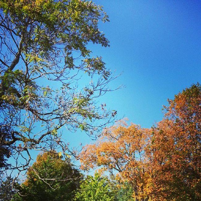 Yet another Fall pic. Myfavoriteseason