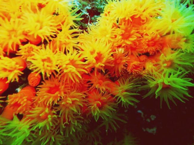 EyeEm Gallery EyeEm Nature Lover Summer ☀ Colour Of Life Capture The Moment Sea Life