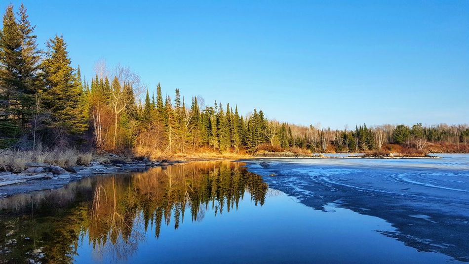 Tree Reflection Nature Water Landscape Beauty In Nature Scenics Outdoors No People Lake Reflection On The Water Oh Canada! Creativity Has No Limits Sunlight Peace And Quiet Sunshine Just Passing Through Lake Of The Woods Lost In The Landscape