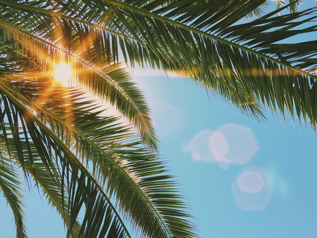 Palm tree filter... Palm Tree Tree Leaf Palm Leaf Nature Green Color Growth Beauty In Nature Palm Frond Frond Day Low Angle View Plant Outdoors Sky Close-up Tropical Exotic Vacation Summer Sunflare Sunlight VSCO Details Of My Life Travel Sommergefühle