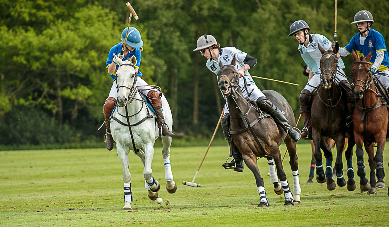 Watch The Ball Animal Animal Themes Carefree Competing Competition Fun Guards Club Horse Polo Recreational Pursuit Smiths Lawn First Eyeem Photo The Essence Of Summer