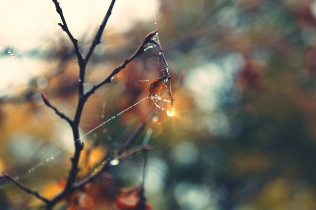 Nature Beauty In Nature Spider Web Outdoors Plant Autumn Tranquility Day No People Cold Temperature Autumnbeauty Autumn Colors Natureisart Explorenature Hobbyphotography Raindrops Nature_perfection Tree Autumn Leaves Sunshines Naturlover